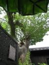 めおとの湯 御神木 無垢の木