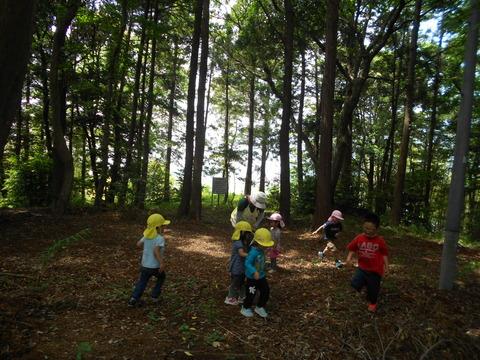 神社裏の森