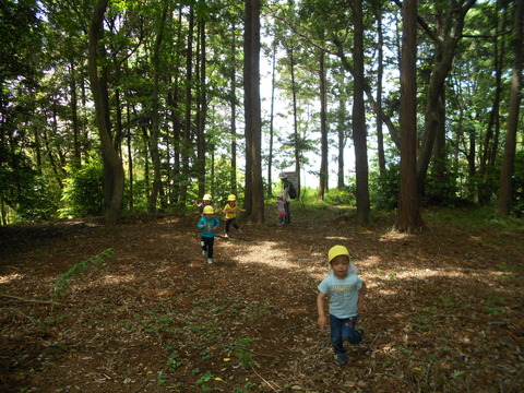 神社の森2