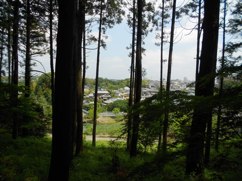 森からの眺め
