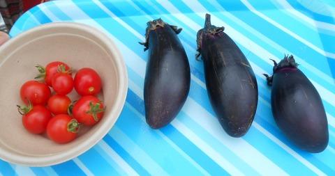 収穫したなすトマト