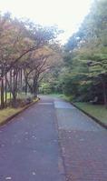 県立図書 散歩坂道