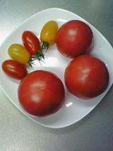 北海道のトマト 1
