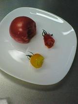 美味しい?トマト
