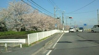 春 桜終了
