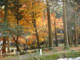 醒ヶ井の紅葉