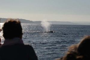 port-5whales-
