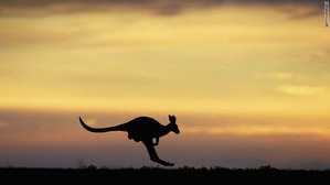 animal-kangaroo-in-australia