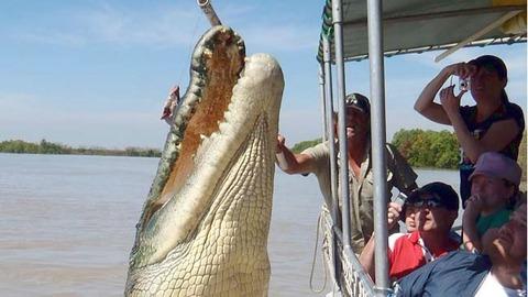 croc-brutus1