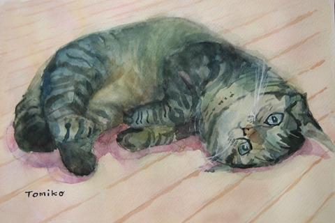 かわいこぶってる猫
