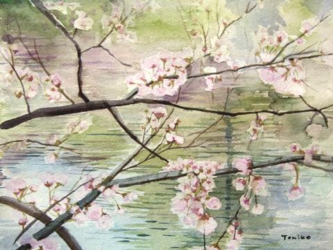 家に籠って桜