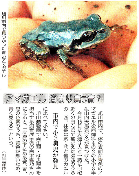 青色のニホンアマガエル