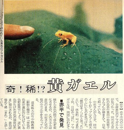 黄色のニホンアマガエル