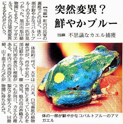 緑・青・黄斑のニホンアマガエル