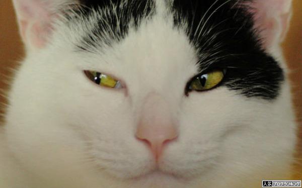 隣のパチンコ台をチラ見する猫なら許す