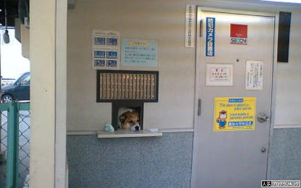 景品交換所に犬おったらびっくりやな