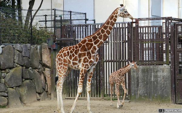 パチンコ動物園