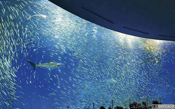水族館行くとは健全な遊びですね