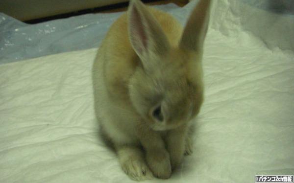 このウサギさんになら確変あげちゃう