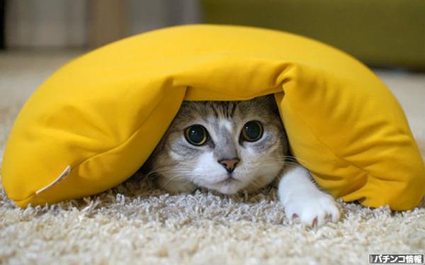 エヴァ8の悪口はネコに言え!