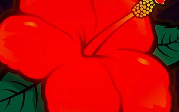 okidoki-hibiscus