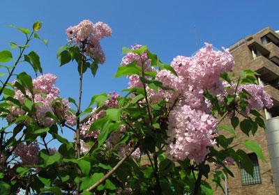 新宿の道に咲く花