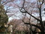 上野桜木二丁目