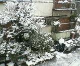 上野の丘の雪景色.jpg
