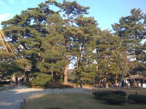 兼六園_立派な木々