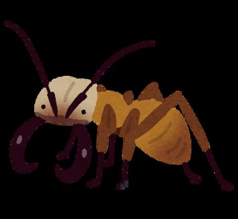 bug_guntai_ari