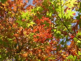 クソ暑くても秋の気配
