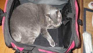 ツーリングバッグと猫