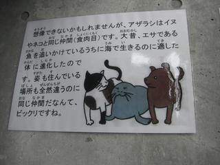 アザラシと犬猫は同一種