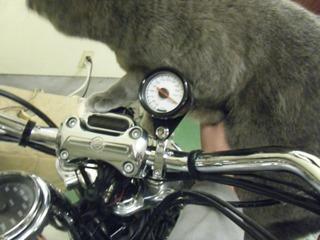 ハーレーの油温計