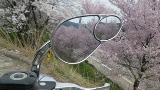 ハーレーのミラーと桜