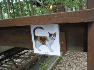 キャンプ場のネコ