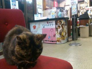 映画館と猫