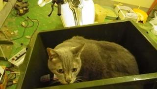 ハーレーのツアーパックと猫