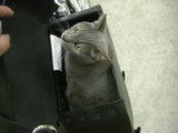 ハーレーダビッドソンのレザーバッグとペット