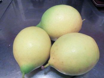 ロベルティーノ君ちのレモン