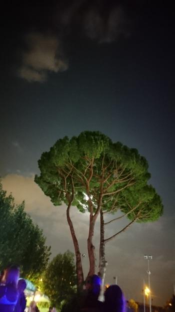 月が松の木にかかる