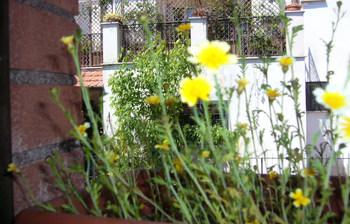 花盛りの春菊
