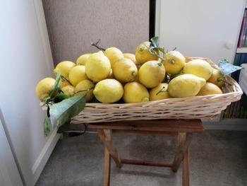 レモンが一杯