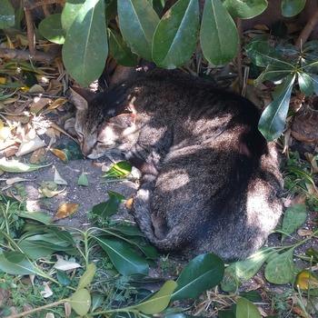 日陰で猫は寝る