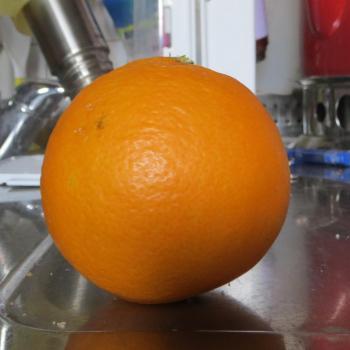 無農薬オレンジ