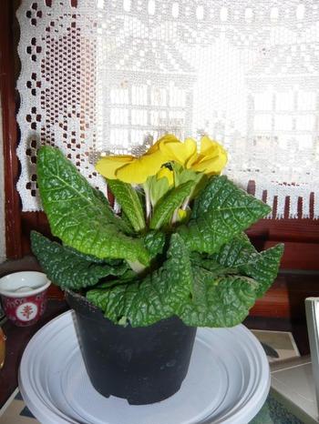 西に黄色い花