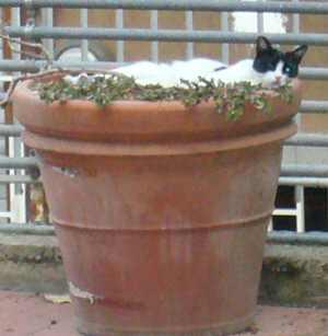 植物抹殺猫