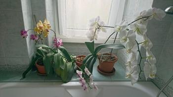 風呂場の蘭