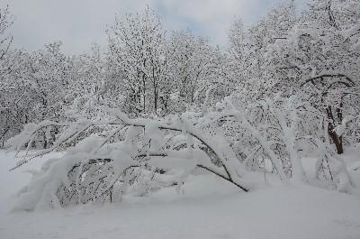 1月の森121