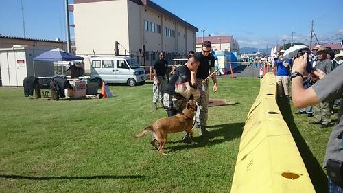 軍用犬 横田基地友好祭